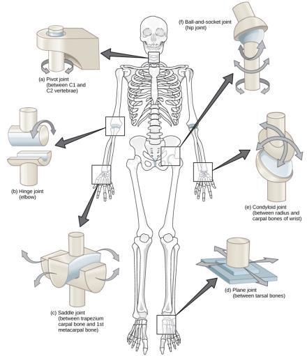glucosamine chondroitin msm térdízület 2. fokú deformáló artrózisa
